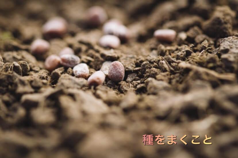 種まき画像